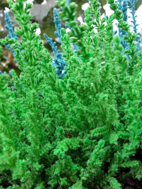 The Heather Society Growing Amp Aftercare Faq