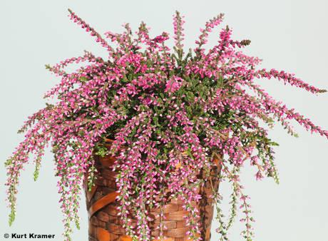 'Janina' {Gardengirls®}