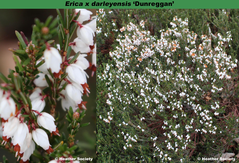'Dunreggan'