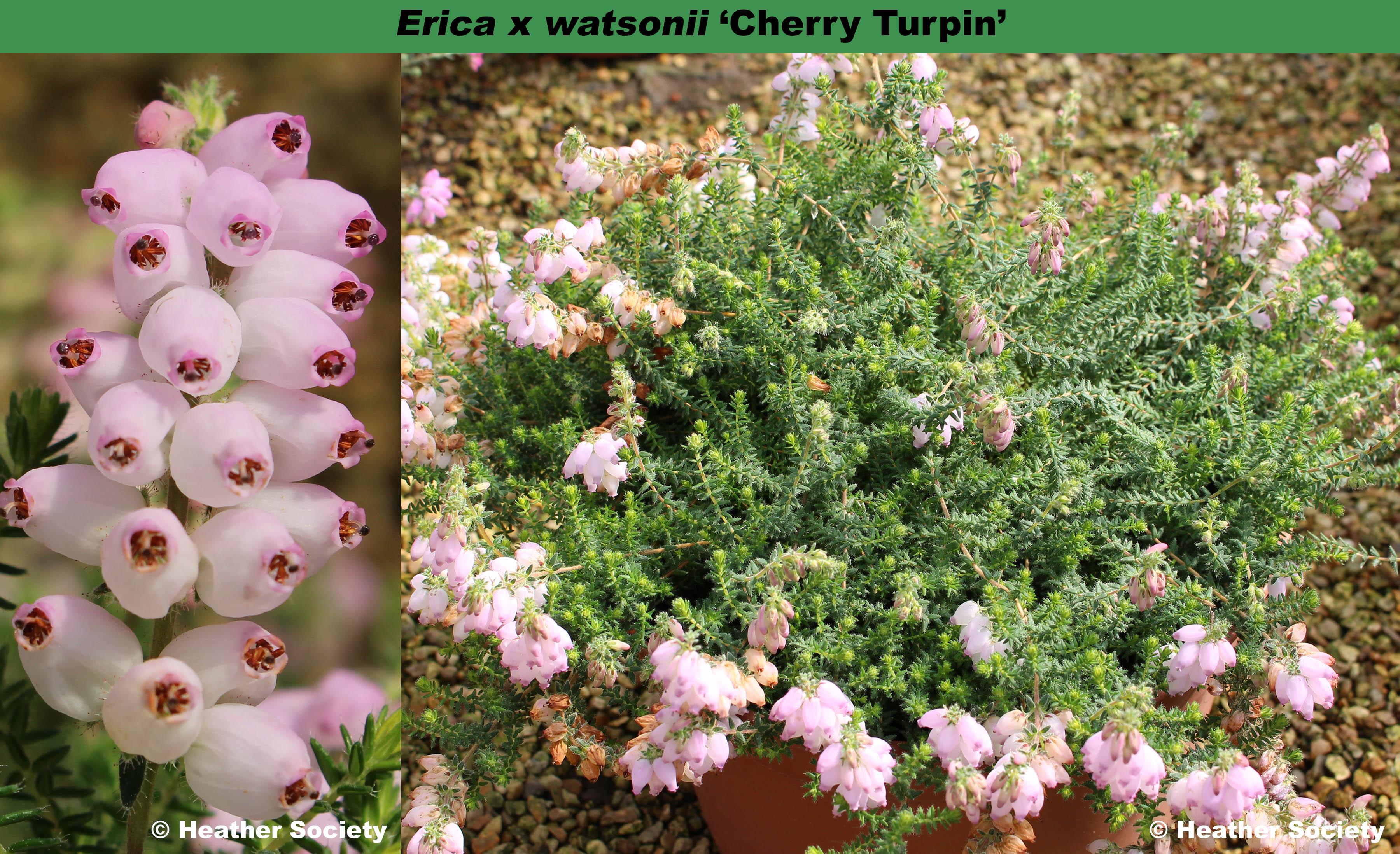 'Cherry Turpin'