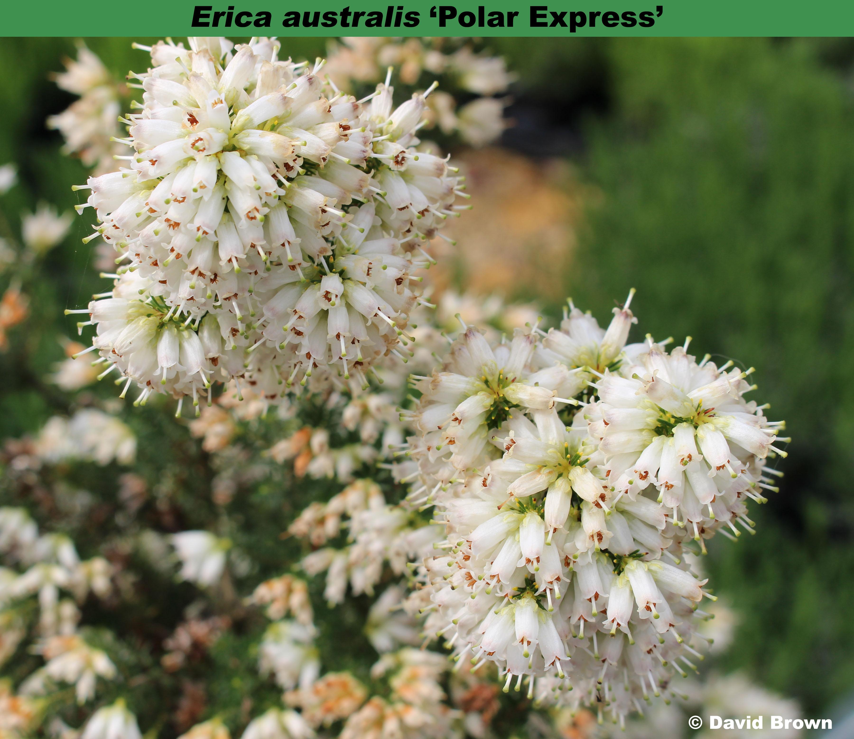 'Polar Express'