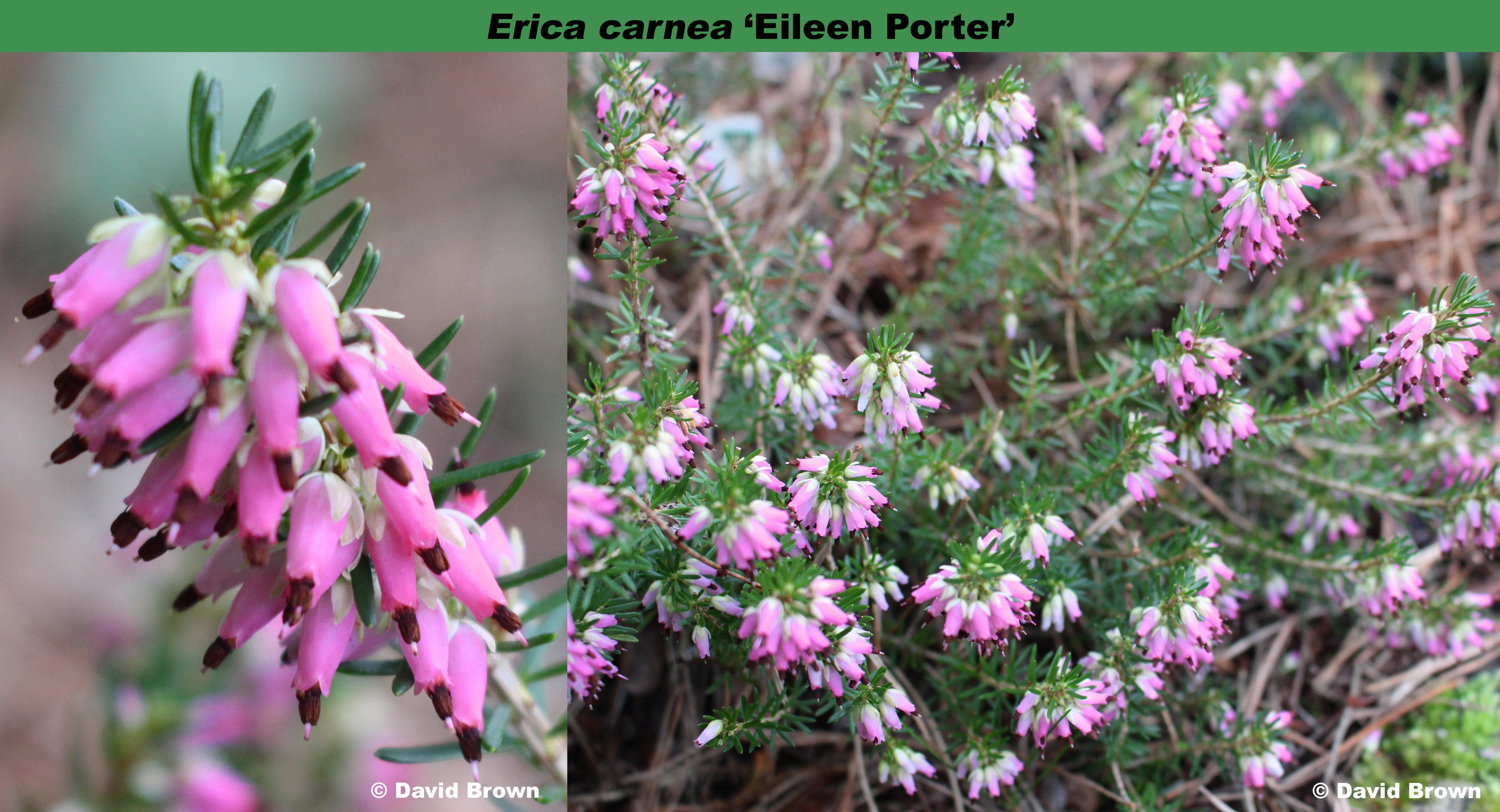 'Eileen Porter'