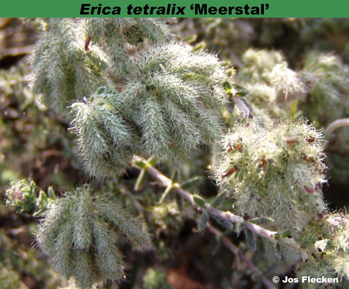 'Meerstal'