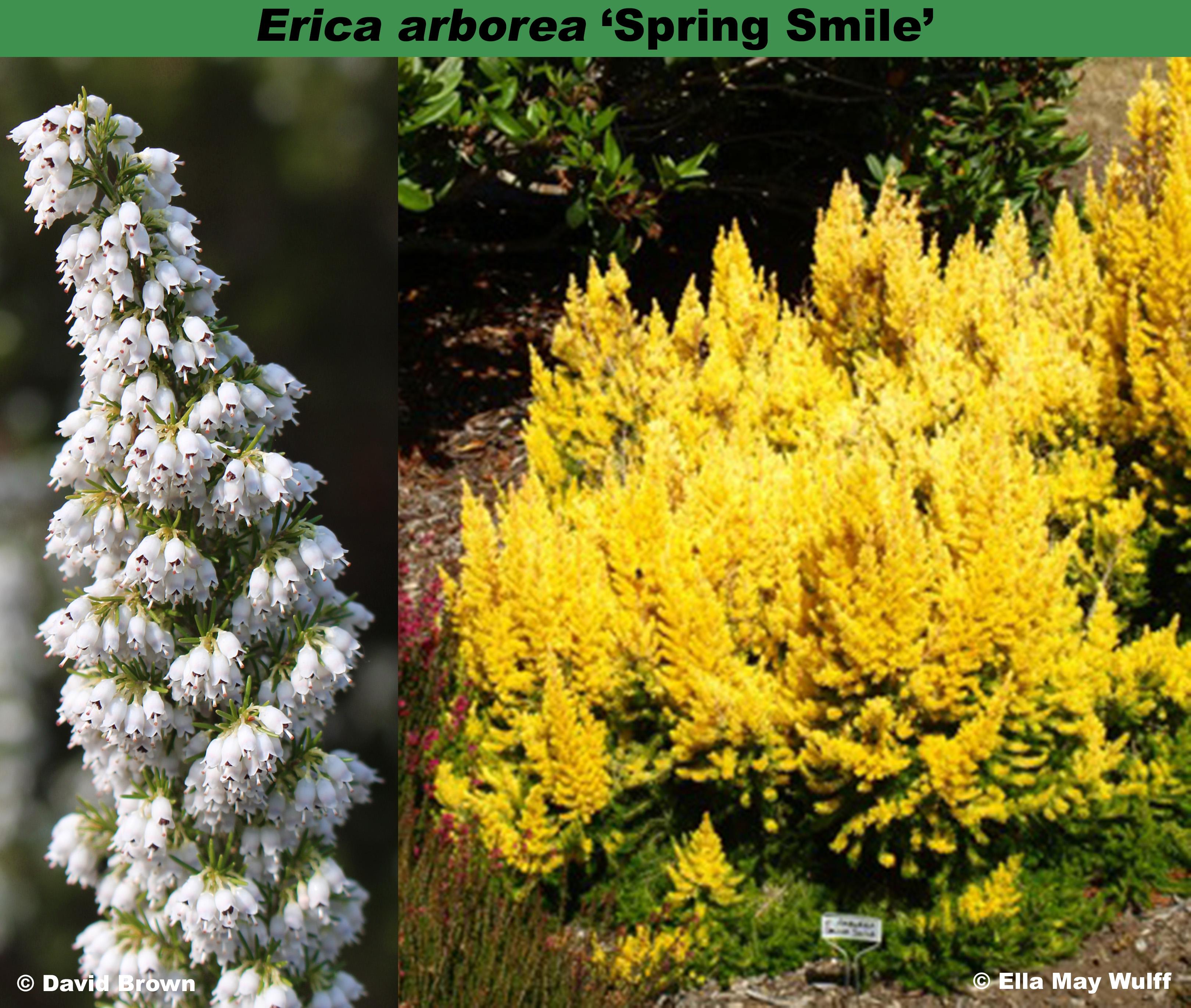 'Spring Smile'