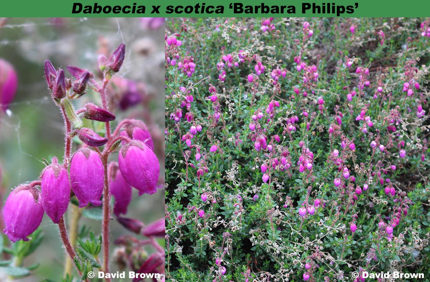'Barbara Phillips'