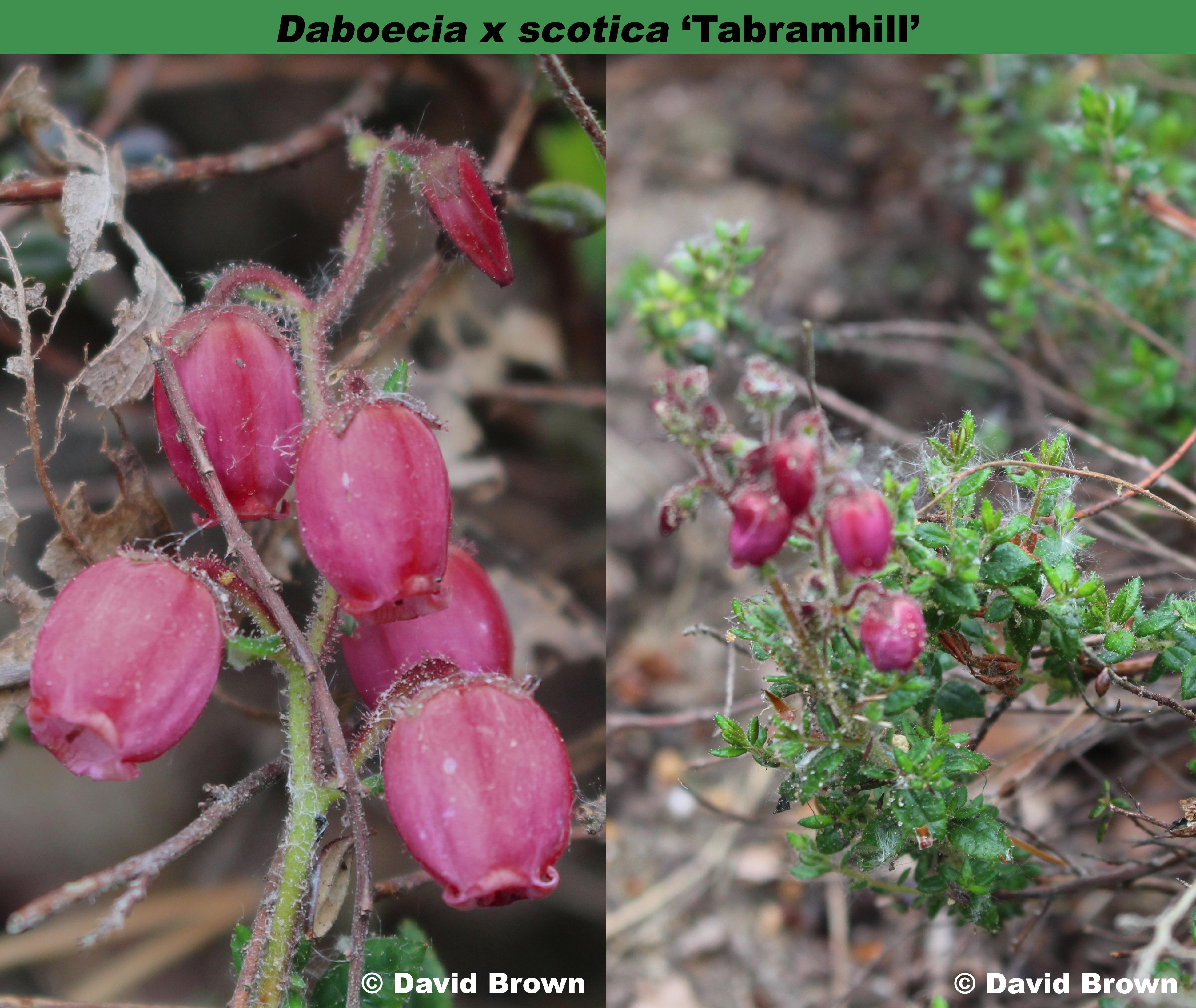 'Tabramhill'