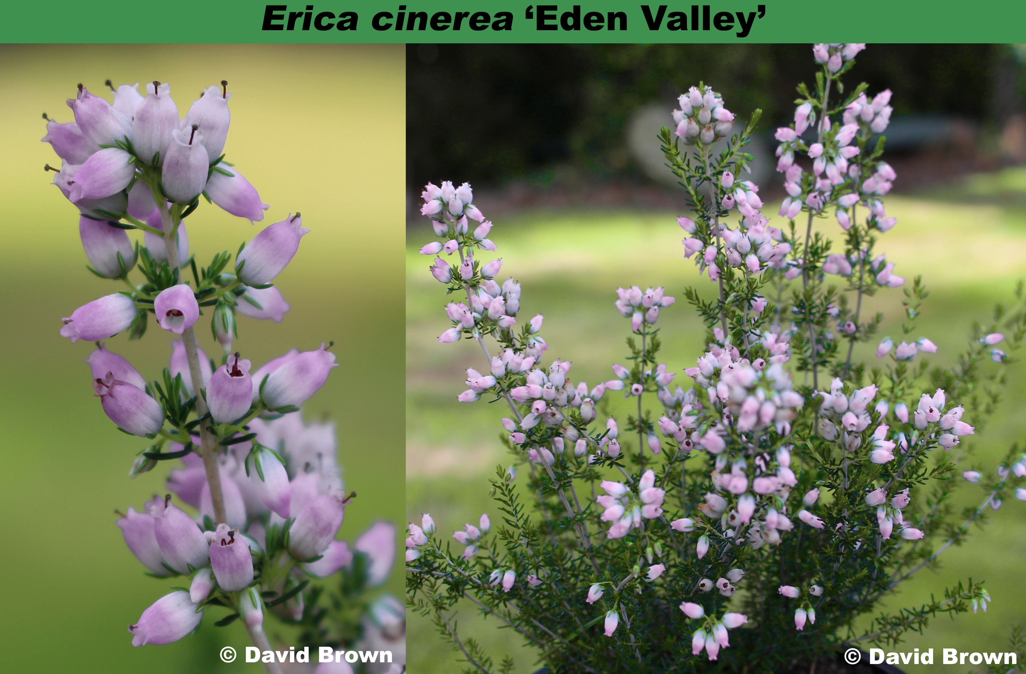 'Eden Valley'