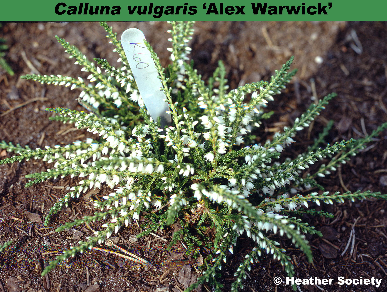 'Alex Warwick'