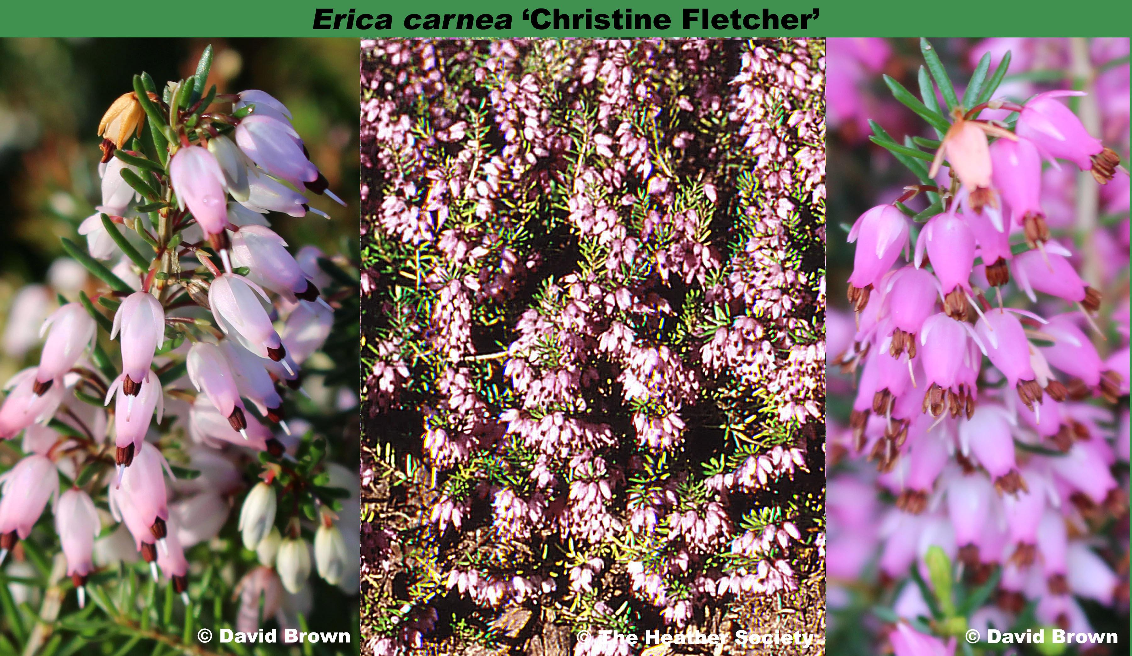 'Christine Fletcher'