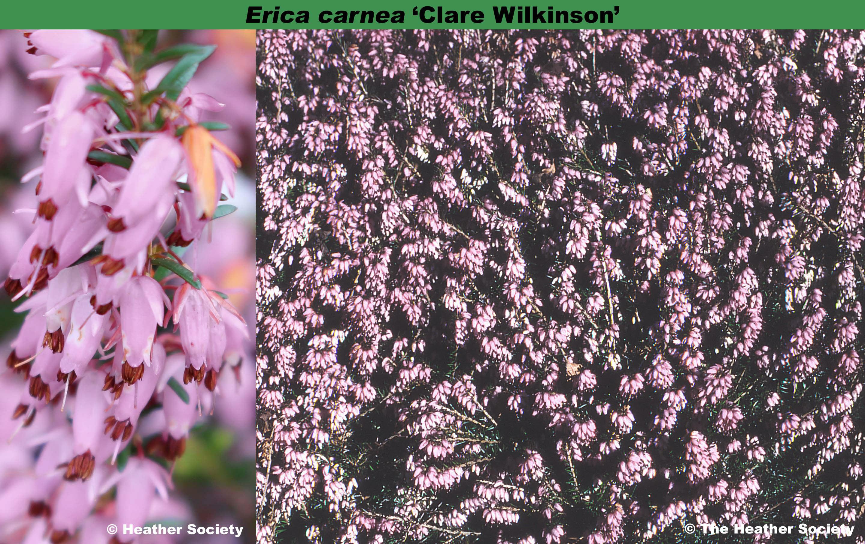 'Clare Wilkinson'