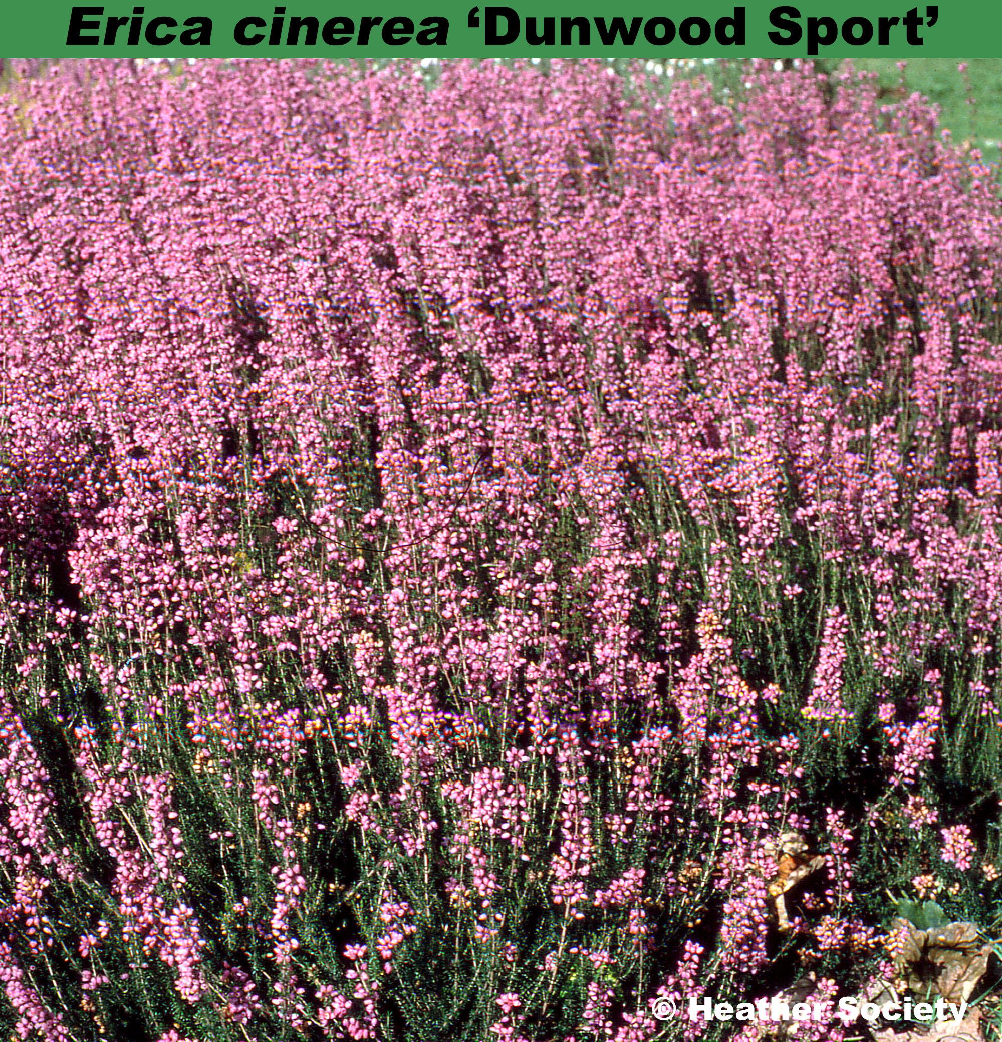 'Dunwood Sport'
