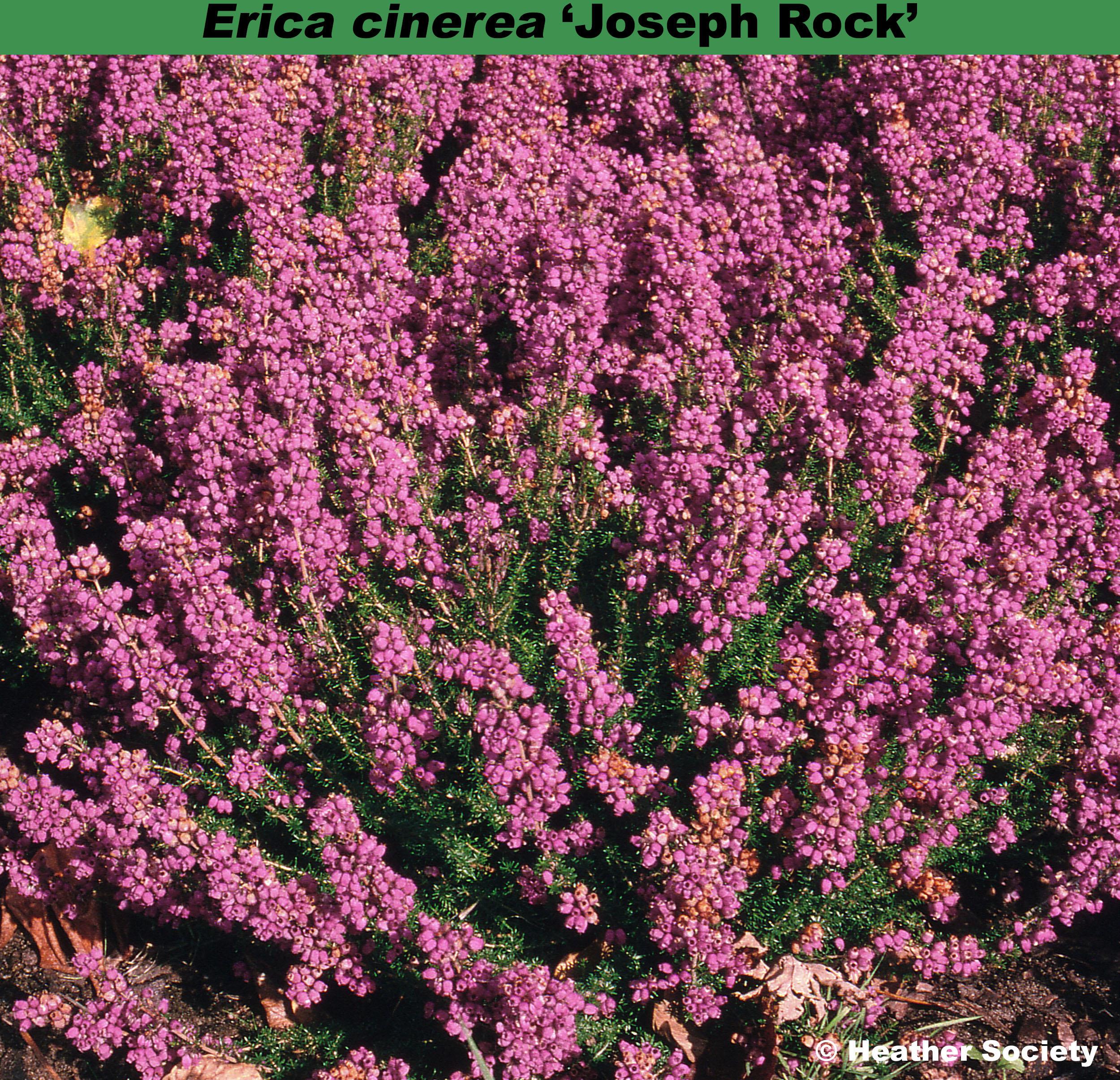 'Joseph Rock'