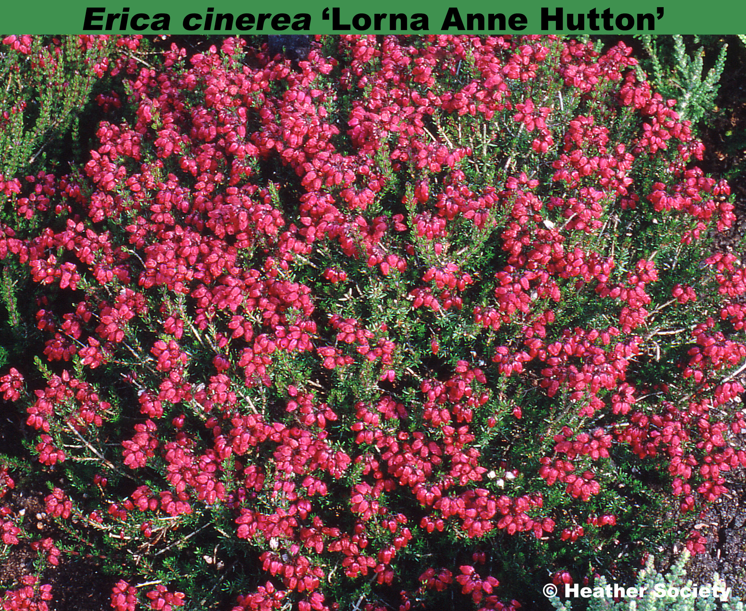 'Lorna Anne Hutton'