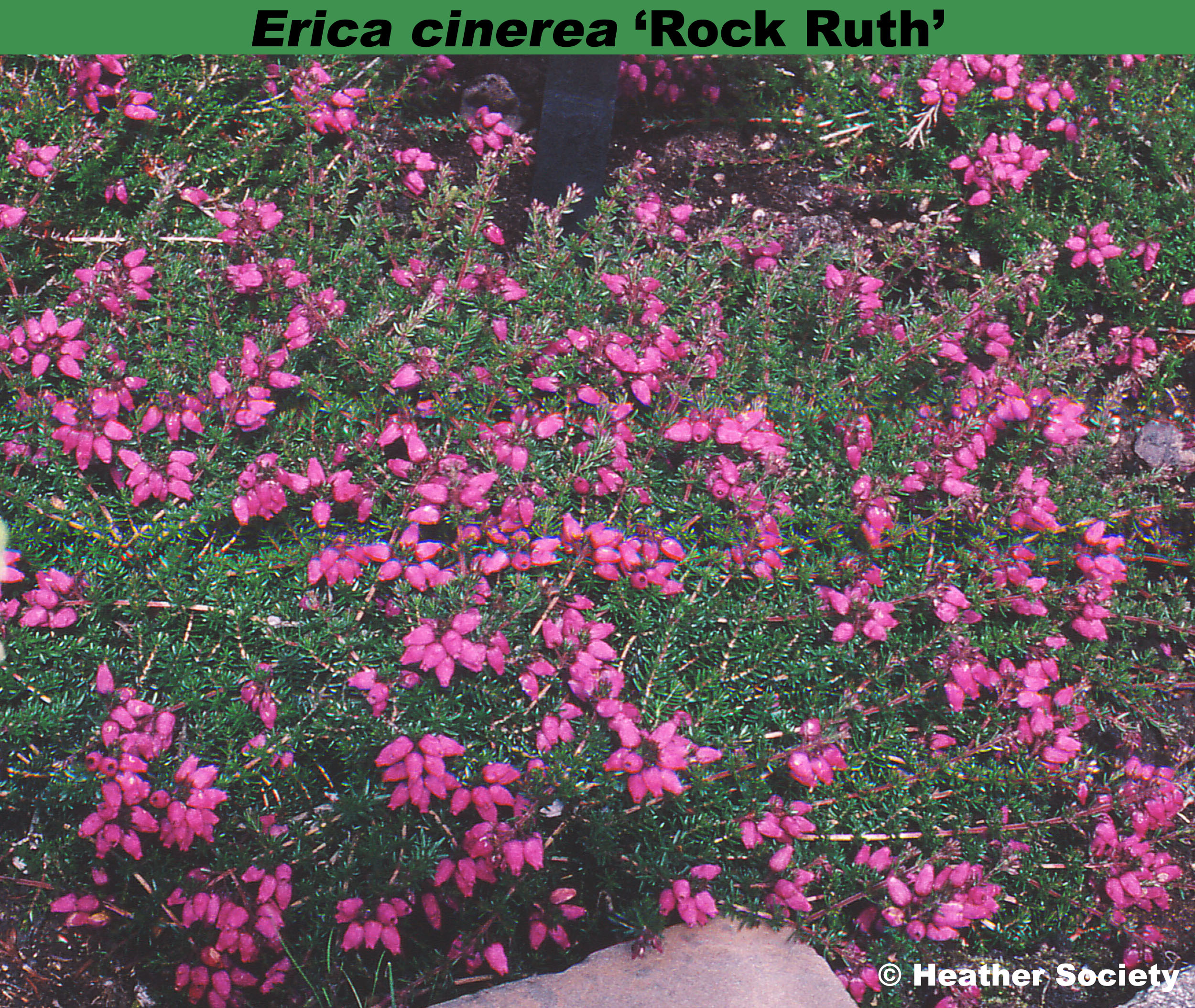 'Rock Ruth'
