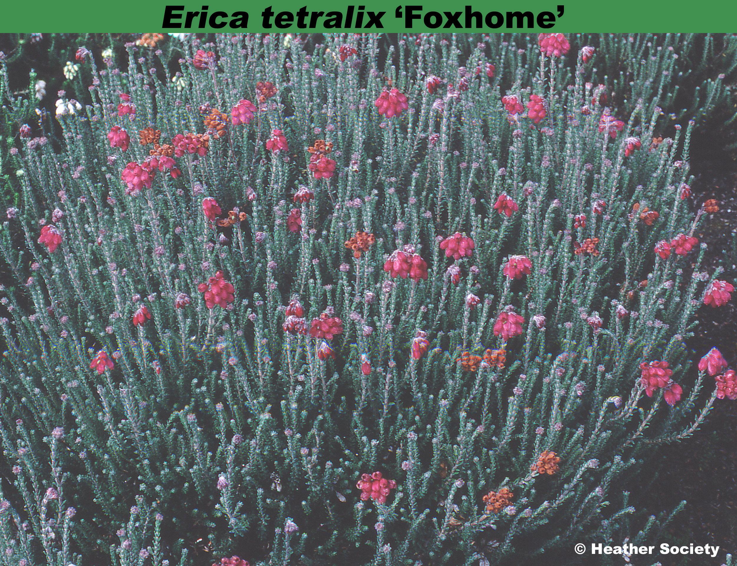 'Foxhome'