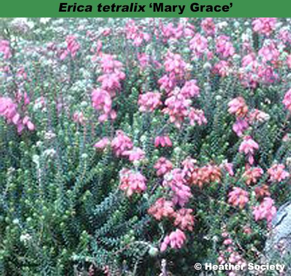 'Mary Grace'